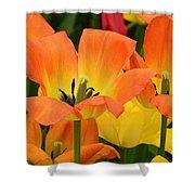 Tantalizing Tulips Shower Curtain