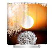 Taraxacum Sunset Shower Curtain