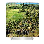 Taro Fields Shower Curtain