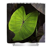 Taro Hoomaluhia 2 Shower Curtain