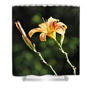 Tasmania Day Lily Shower Curtain