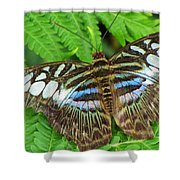 Tattered Beauty Shower Curtain