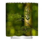 Tattered Leaves Shower Curtain