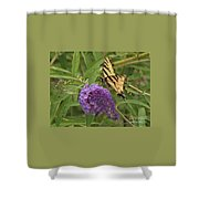 Tattered Tiger Swallowtail Butterfly          August         Indiana Shower Curtain