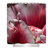 Tattered Tulip Petals Shower Curtain