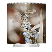 Tattered Wings B1 Shower Curtain