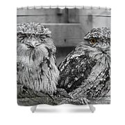Tawney Frogmouths Shower Curtain
