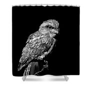 Tawny Frogmouth In Black And White Shower Curtain