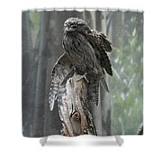 Tawny Frogmouth With It's Eyes Closed And Wing Extended Shower Curtain