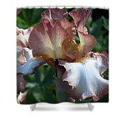 Tawny Iris Photograph Shower Curtain