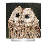 Tawny Owl Shower Curtain