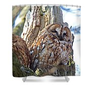 Tawny Owls Shower Curtain