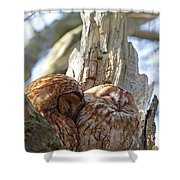 Tawny Owls In Love Shower Curtain
