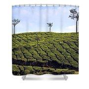 Tea Planation In Kerala - India Shower Curtain