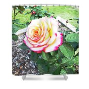 Tea Rose For A Lady Shower Curtain