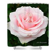Tea Rose In Pink Shower Curtain