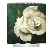 Tea Rose Shower Curtain