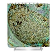 Teal Shell Shower Curtain