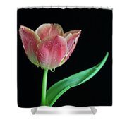 Teardrop Tulip Shower Curtain by Tracy Hall