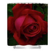 Teardrops Of A Rose Shower Curtain