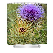Teasel In Bloom Shower Curtain