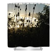 Teasel Sunset Glow Shower Curtain