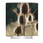Teasle In Morning Light Shower Curtain