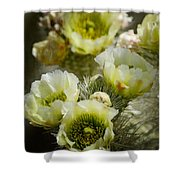 Teddy Bear Cholla-cylindropuntia Bigelovii Shower Curtain