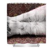 Teddy's Paw Shower Curtain