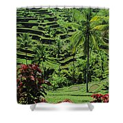 Tegalalang, Bali Shower Curtain