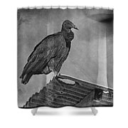 Tell No Tales.. Shower Curtain
