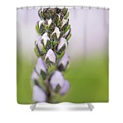 Tender Love Shower Curtain