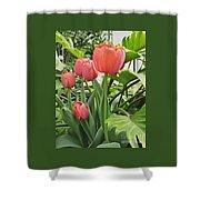 Tender Tulips Shower Curtain