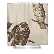 Tengmalm's Owl Shower Curtain
