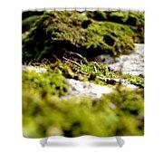 Tennesee Moss Shower Curtain