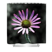 Tennessee Cone Flower Shower Curtain