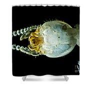 Termite Head, Lm Shower Curtain
