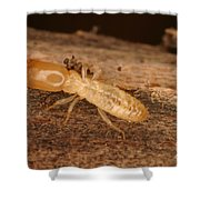 Termite Shower Curtain