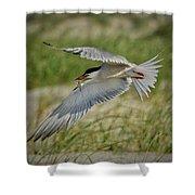 Tern Shower Curtain