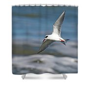 Tern Over The Waves Shower Curtain