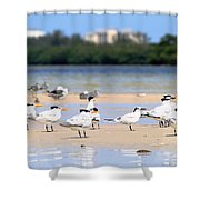 Terns At Fort Myers Shower Curtain