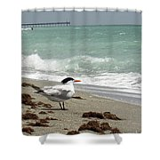 Tern's View Gp Shower Curtain