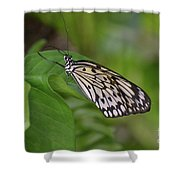 Terrific Capture Of A Paper Kite Butterfly On A Leaf Shower Curtain