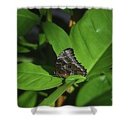 Terrific Eyespots On A Owl Butterfly On Leaves Shower Curtain