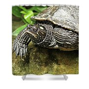 Tess The Map Turtle #2 Shower Curtain