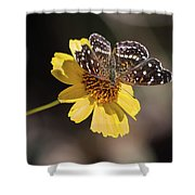 Texan Crescent Butterfly On Marigold-img_1348-2016 Shower Curtain