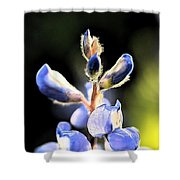 Texas Blue Bonnet Impressions 1 Shower Curtain