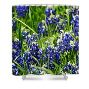 Texas Bluebonnets 002 Shower Curtain