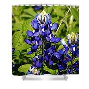 Texas Bluebonnets 005 Shower Curtain