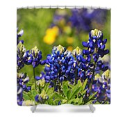 Texas Bluebonnets 006 Shower Curtain